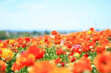 flowers-in-a-field