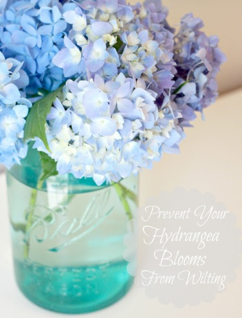 How to Keep Cut Hydrangea Blooms from Wilting 020 edited 2